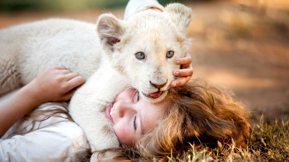 Lionceau deviendra grand