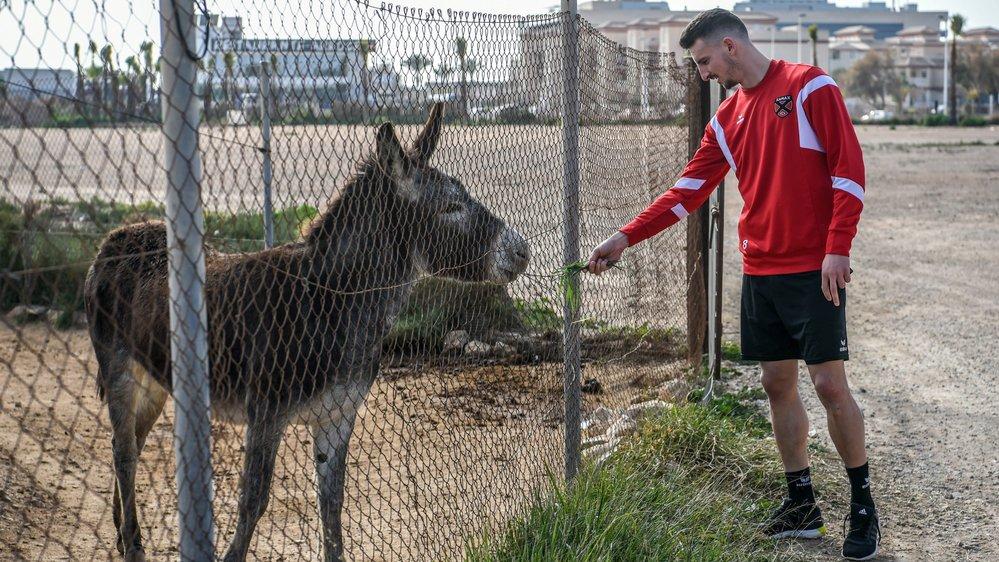 Les joueurs passent devant une ferme pour se rendre de l'hôtel au centre d'entraînement. Et Samir Ramizi sympathise avec un quadrupède...