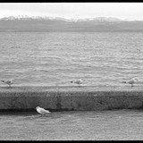 FONDS OUVERT. Photographies de Bernard Dubuis