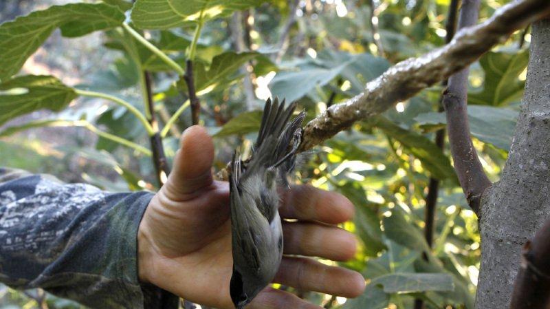 France: saisie «record» de 1903 pièges à oiseaux chez un braconnier dans le Var