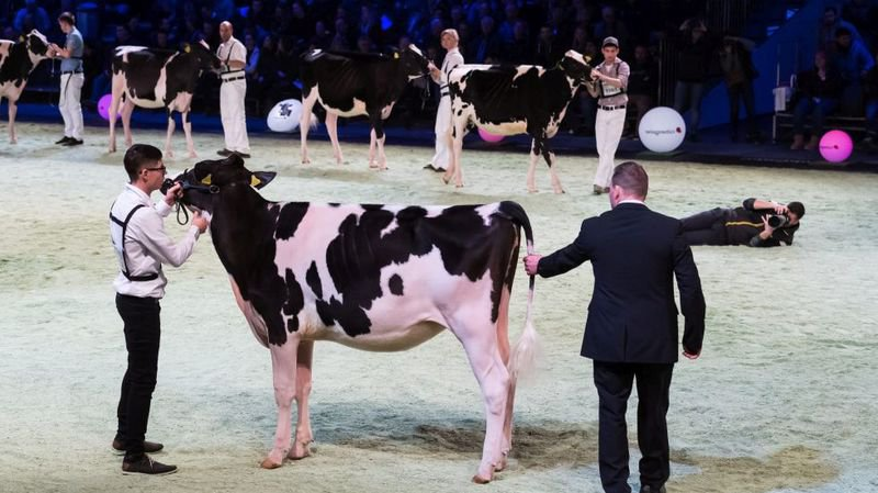 Swiss Expo: Leurs vaches ont du chic et tant pis pour les véganes