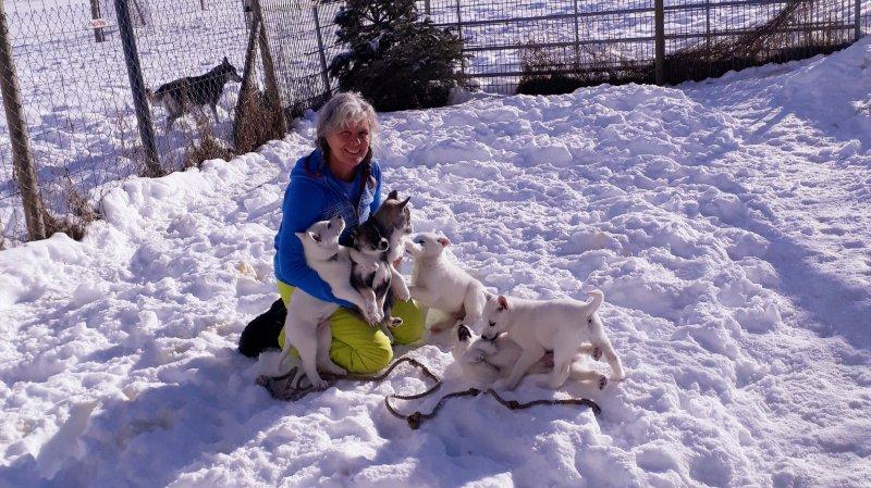 Dernier câlin à sept petits huskies aux Reussilles