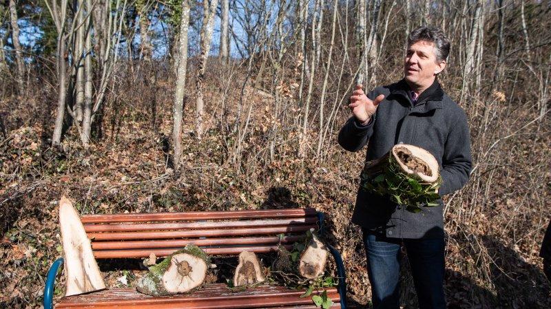 Neuchâtel va abattre des arbres pour mieux en faire pousser