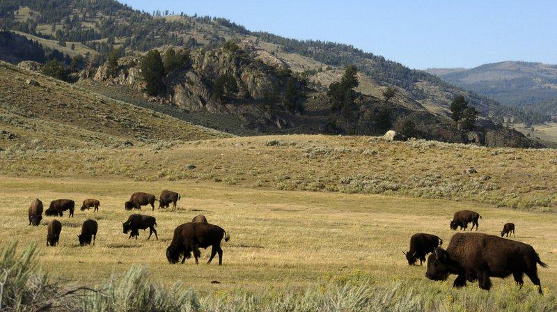 États-Unis: rare accord au Sénat sur la protection des parcs naturels