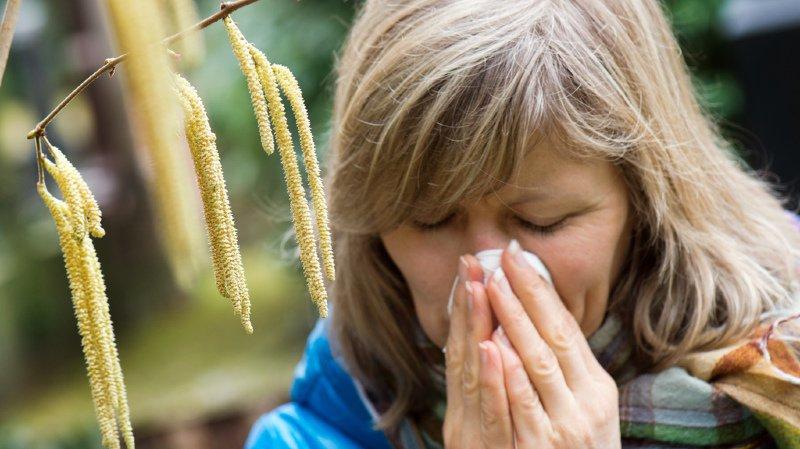 Allergies: le pollen des noisetiers chatouille déjà le nez et la gorge des personnes allergiques