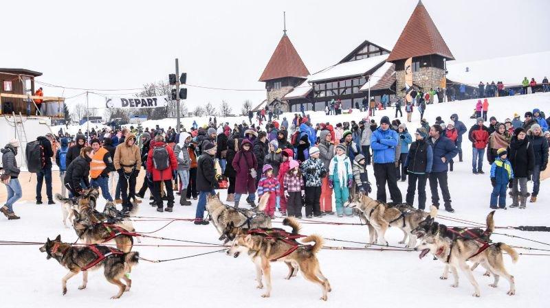 Les chiens de traîneau attirent quelque 18'000 visiteurs à Saignelégier