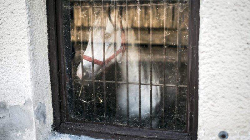 Huit chevaux ont été mis en quarantaine à Corcelles à cause de la gourme (image d'illustration).