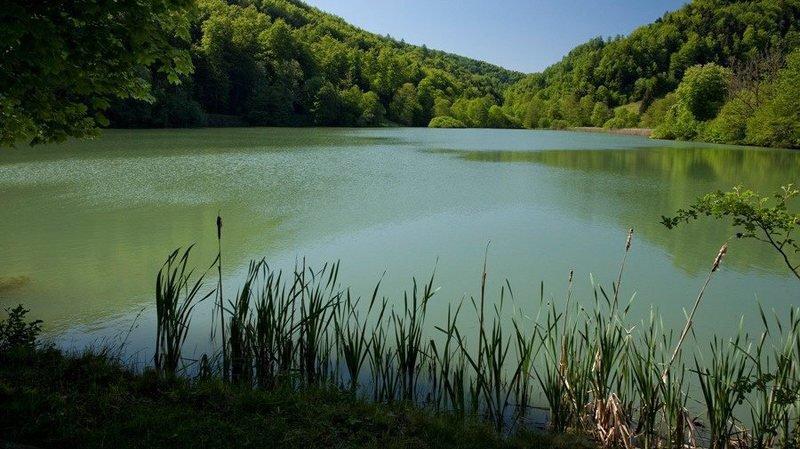 L'étang à la belle saison.