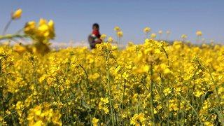 Les députés neuchâtelois veulent un canton sans pesticides