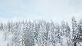 Paradis blanc des Bugnenets (18.01.2019) - Daniel Richardet