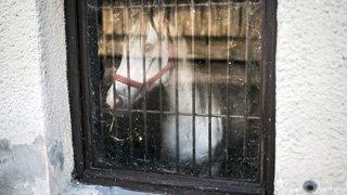 La gourme attaque les chevaux neuchâtelois, mais rien de grave