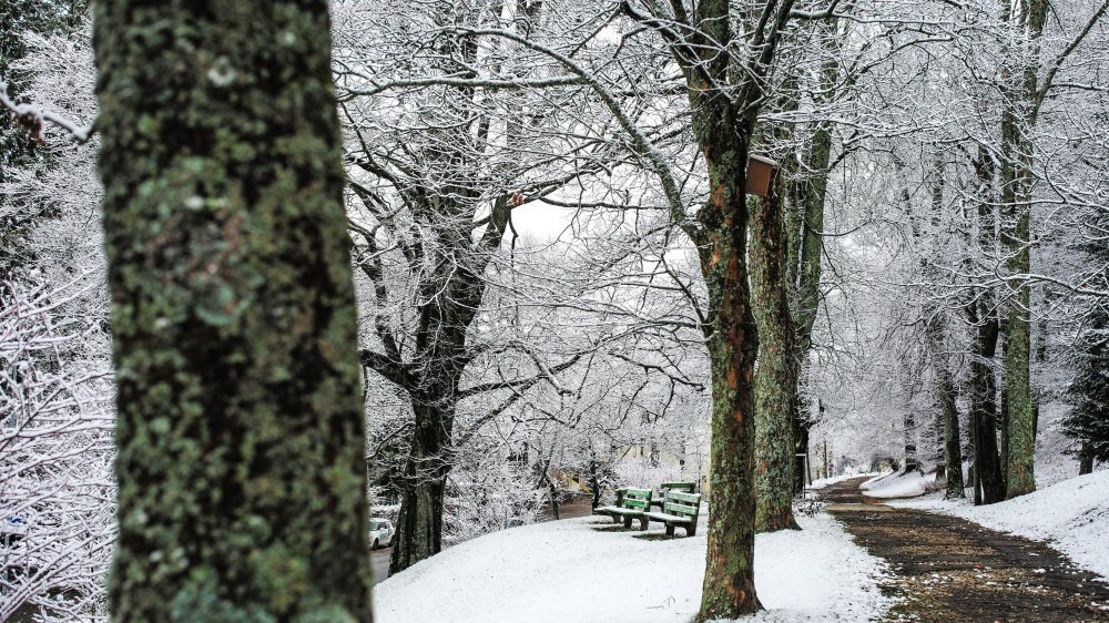 Le parc Gallet à La Chaux-de-Fonds. Archives: Christian Galley