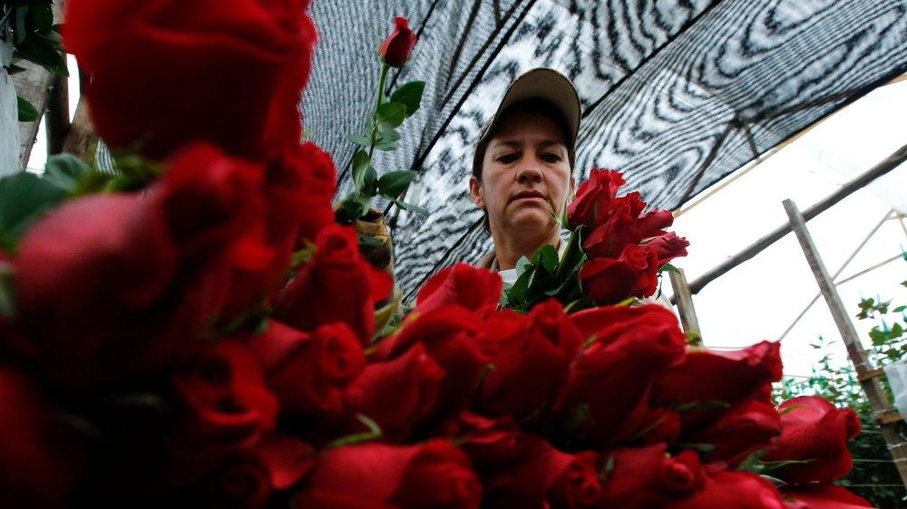 La rose est la fleur la plus importée dans la Confédération.
