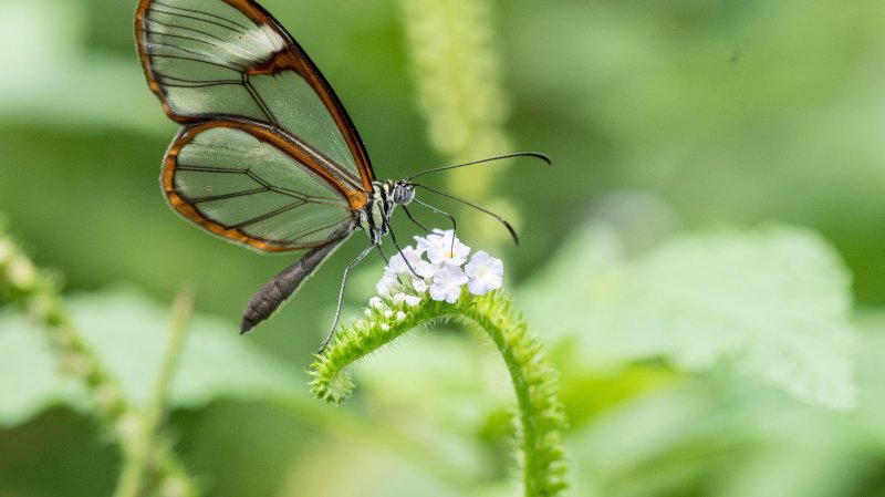 Kerzers: le Papiliorama va rouvrir le lundi 8juin