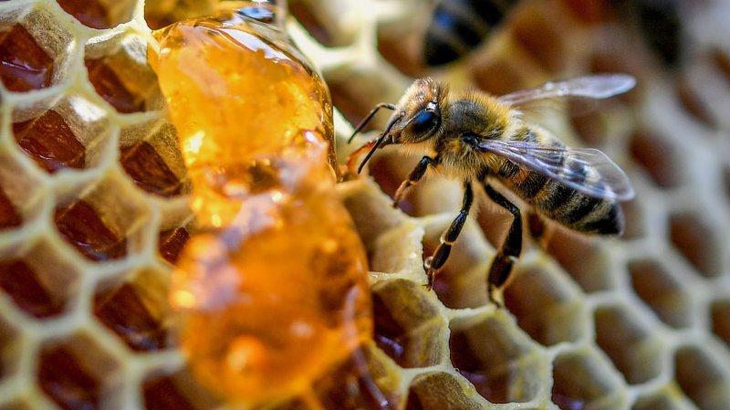 Les néonicotinoïdes très persistants dans le miel selon une étude neuchâteloise