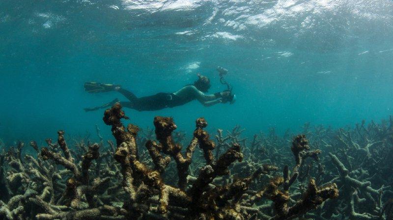 Climat: les canicules marines dévastent la faune, mais le pire est à venir