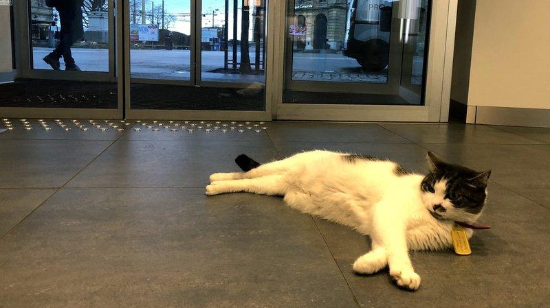 Le chat Jojo a migré de la BCN à l'UBS.