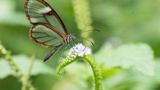 Eclairage: «La mort des insectes menace la survie de l'espèce humaine»