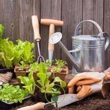 Jardin en pot et bac