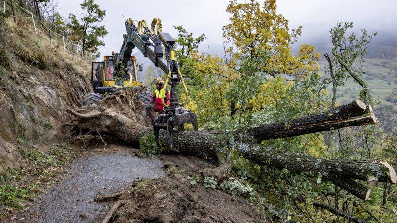 Un bûcheron enlève un arbre tombé dans le Haut-Valais.