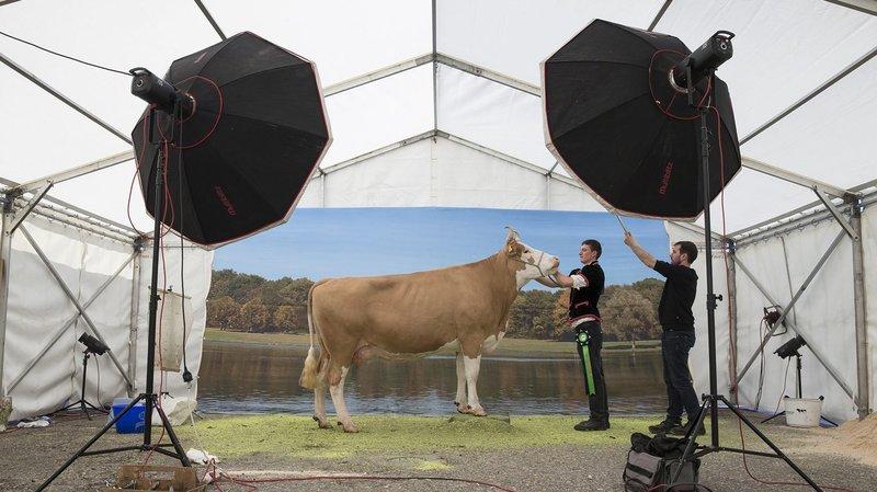 Les vaches étaient les stars de la journée, ce samedi à Saignelégier.