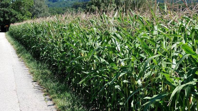 Est-ce mieux d'utiliser des produits phytosanitaires biologiques?