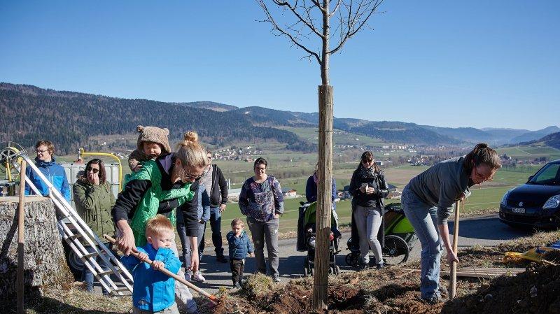 Les naissances fêtées avec des arbres à Val-de-Travers