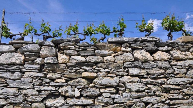 Valais: chute mortelle d'un septuagénaire dans les vignes à Sion