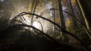 Du bois des Montagnes neuchâteloises dans nos chaudières?
