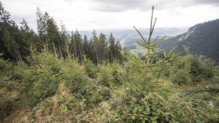 30 000 photos de l'inventaire forestier national disponibles sur internet