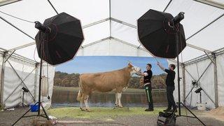 Près de 200 vaches défilent à l'Arc Jurassien Expo de Saignelégier