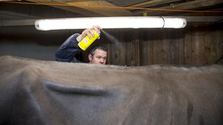 Expo de vaches laitières à Saignelégier