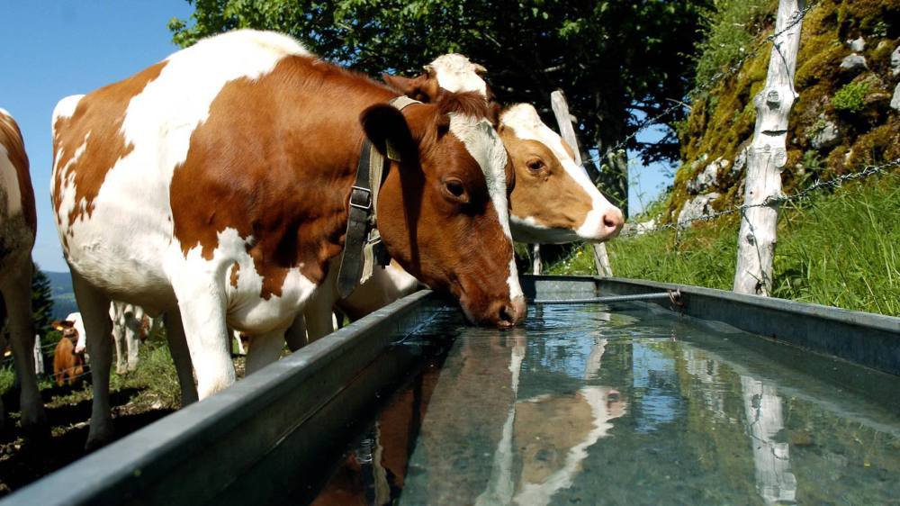 De nouvelles installations pourraient être nécessaires pour abreuver le bétail en été dans le canton de Neuchâtel.