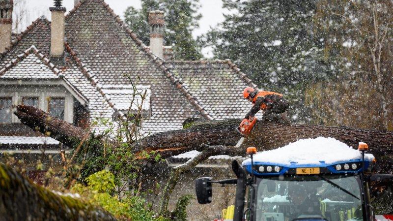 Le retour de la neige abat un grand arbre et bloque une route à Neuchâtel