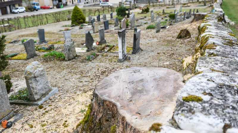 Les arbres qui ornaient le cimetière de Valangin n'ont pas été désouchés, car il aurait fallu casser le mur en pierres sèches.