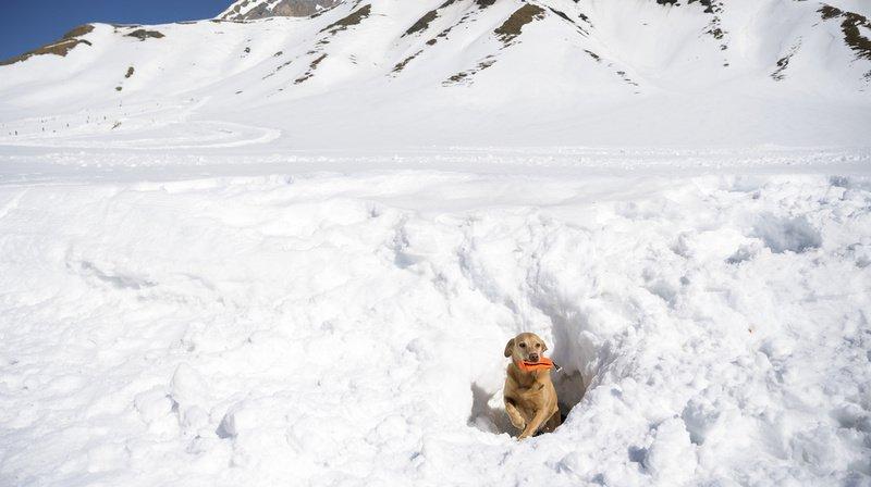 L'objectif est d'entraîner les chiens afin qu'ils puissent retrouver les personnes et les objets ensevelis le plus rapidement et le plus sûrement possible et de le signaler en grattant continuellement.