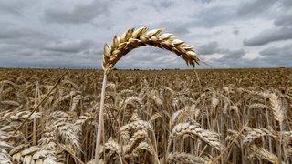 Vaut-il mieux consommer du non bio produit en Suisse, ou alors un produit bio venant de l'étranger ?