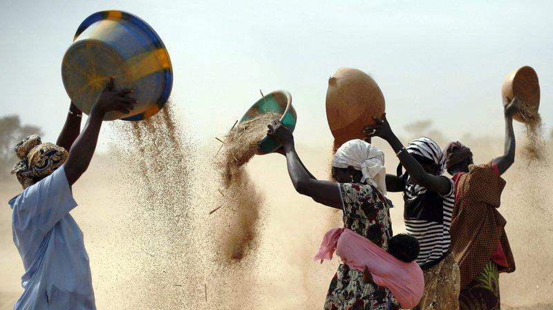 Le pays dogon est plongé dans une grave crise alimentaire.