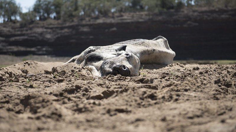 """Climat: pour les experts de l'ONU, """"une grande partie de la nature est déjà perdue"""""""