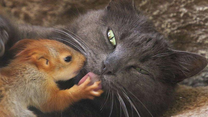 Les petits écureuils n'ont plus du tout peur de leur mère adoptive!