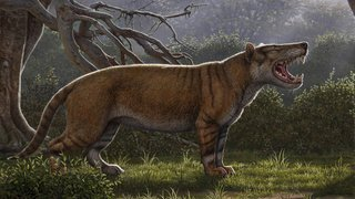 Afrique: le fossile d'un félin 7 fois plus gros qu'un lion découvert au Kenya