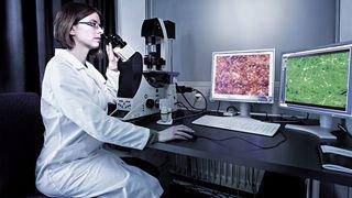 Alternative aux essais sur animaux: un test utilisant des cellules de poissons a été certifié ISO