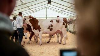 De vachement belles bêtes aux Ponts-de-Martel