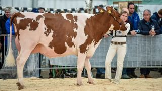 CONCOURS BETAIL 7654