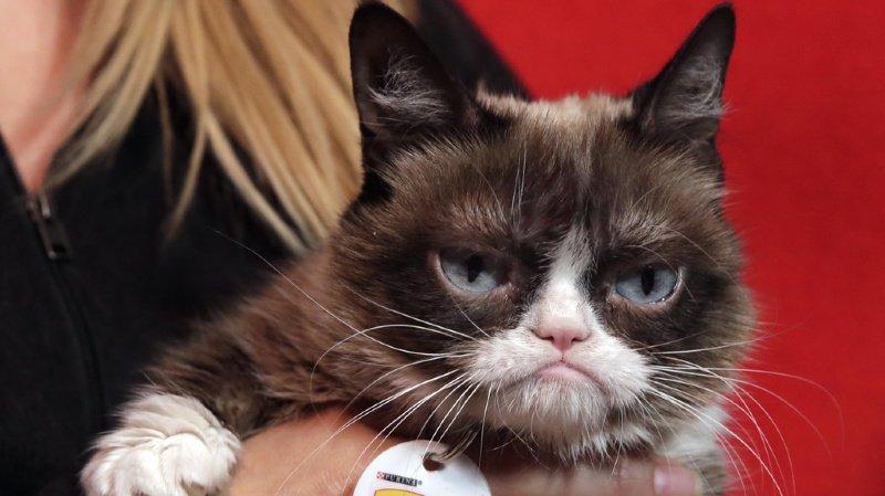 Grumpy Cat était célèbre pour sa bouille constamment grincheuse.