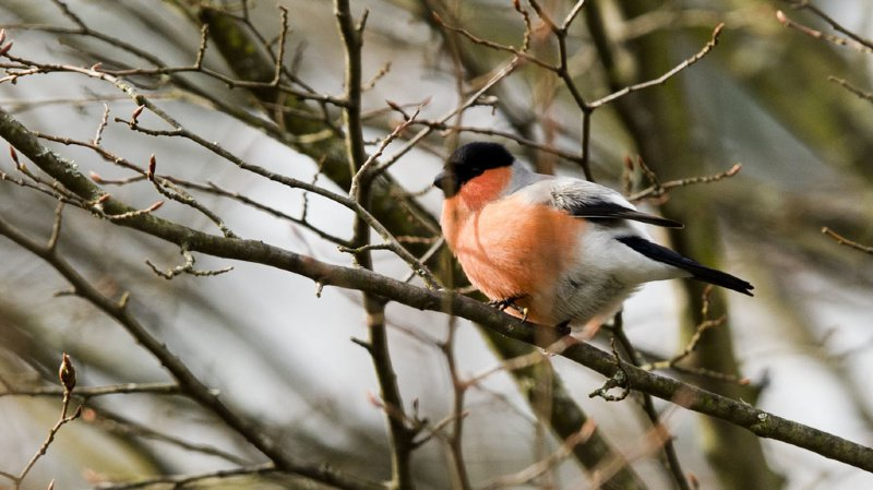 Les résultats montrent que les jardins les plus naturels hébergent la plus grande diversité d'oiseaux. (illustration)