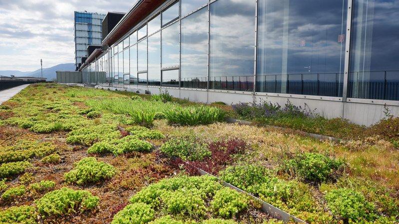 Et si le canton de Neuchâtel devenait le champion des toits végétalisés?