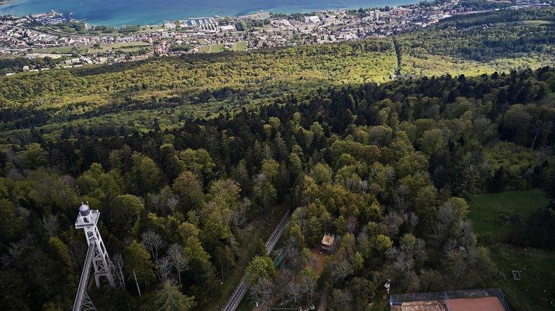 Hommage aux chênes sains et vigoureux de la Ville de Neuchâtel