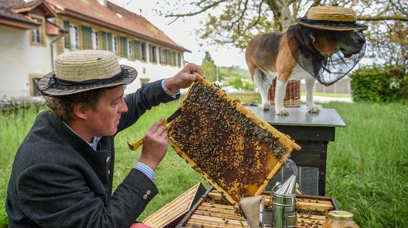 De l'hydromel produit avec des abeilles neuchâteloises, à Cressier