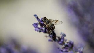 «La nature en miniature» fêtée dans tout le canton de Neuchâtel